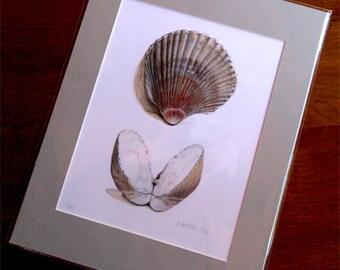 Sea Shells, print, gifts, natural history, Science illustration, Cockel shells, clam, ocean