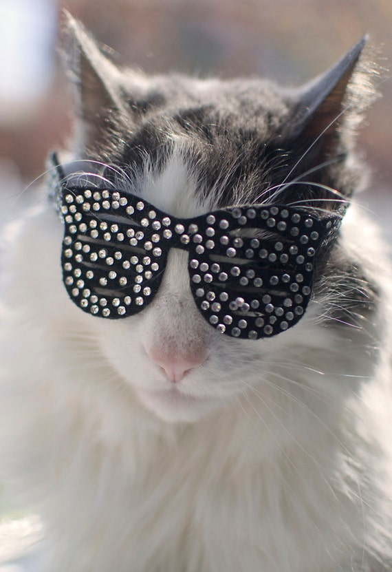 Katye West Stunna Shades /Shutter Shades for Cats
