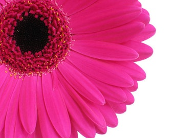 Hot Pink Gerbera Daisy -Digital Download