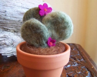 Needle Felted Cactus-rounded petals