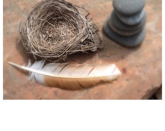 Bird's Nest Wedding Ring Bearer Genuine Small Flat