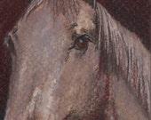 original art aceo drawing horse head