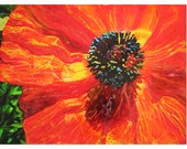 Poppy, 16x20 inches, flowers, red decor, orange decor, gardens, colorful art, wall art, original art, mixed media photograph