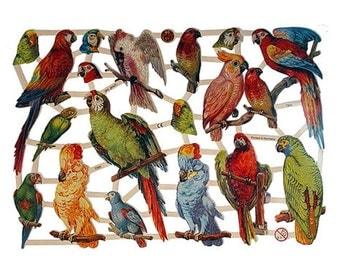 Germany Paper Lithographed Die Cut Scraps Birds Parrots  7303
