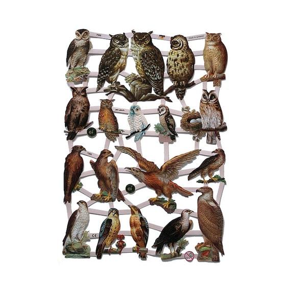 Birds Of Prey Deutsch