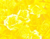 Clearance Sale - Half-yard Cut - Yellow Roses - A7726Y