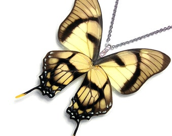 Handmade  Real Butterfly Wing Necklace / Pendant (WHOLE Eurytides Dolicaon - W131)