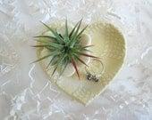 Desk decor, Air plant planter, Yellow flower vase, Cubicle decor, heart planter,  ring holder,