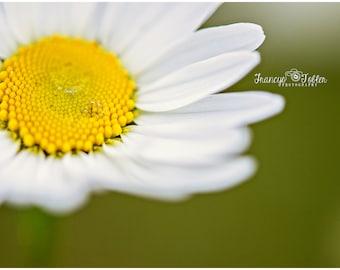 Spring Wild Daisy Flower Fine Art Canvas wrap- Macro