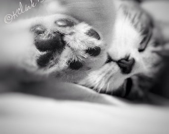 Black Bean Toes Fine Art Photography Black and White Cat Kitty Kitten sweet soft dreamy small petite art