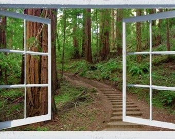 Wall mural window, self adhesive, forest window view-3 sizes available-California Redwoods- Muir Woods Steps - free US shipping