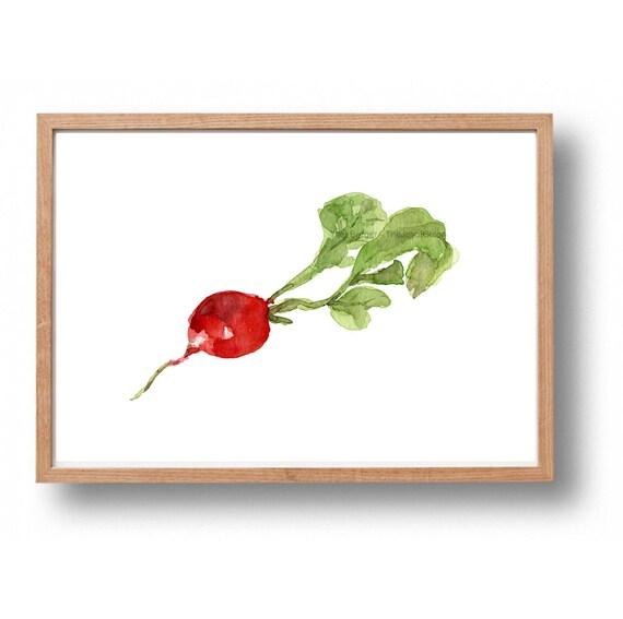radish print, Kitchen art, Radish watercolor print, red, green, Vegetables art, Botanical painting, farmer market, radish art
