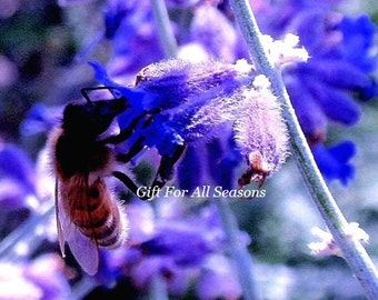 Let It Bee-Russian Sage and Bumblebee-4x6 inch Original Photograph