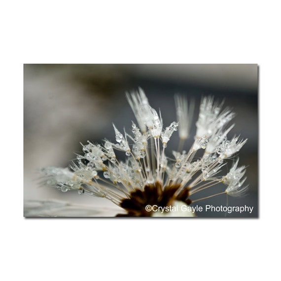 Dandelion Print, Floral Photography Print, Black and White, Brown, Gray, Nature, Conversation Piece, Living Room Art, Office Decor, for Her