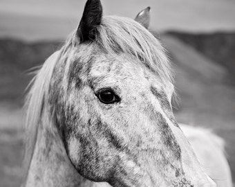 Dramatic Horse Photograph in Black and White, Equine Photography