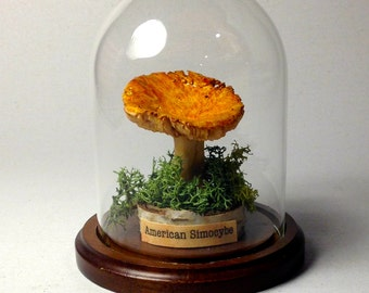 MUSHROOM - Museum Replica Quality in Display Cloche (American Simocybe)