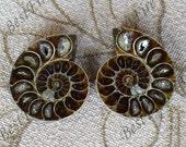 Ammonite Pendants -One Pair of Ammonite Fossil  stone, Nautilus Fossil Spiral, Fossil  2 Matching Half stone 33x39mm