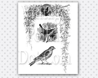Clip Art Birds Flowers Vine Engravings Frame Header Victorian Graphics Border Nature Clipart Printable Digital Collage Sheet Scrapbooking