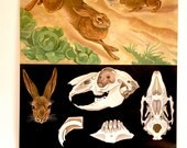 pulldown canvas Hare rabbit print poster chart wall hanging amazing german original