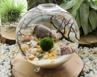 Marimo Terrarium Kit by Midnight Blossom - Miniature footed aquarium w/ living Japanese moss ball, sand, pebbles, sea shells and sea fan