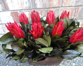 Floral Arrangement   Mothers Day Flowers  Mothers Day Gift  Red Proteas    Natural Floral Arrangement    Preserved Salal Floral Arrangement
