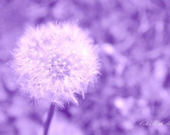 Dandelion Print, Flower Photography, Spring Print, Nature Photo, Fine Art Print, Abstract, Flower Print, Dreamy, Bokeh, Purple, Lavender