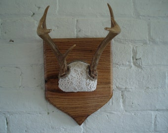 Vintage Deer Antlers - Reporpused - Taxidermy
