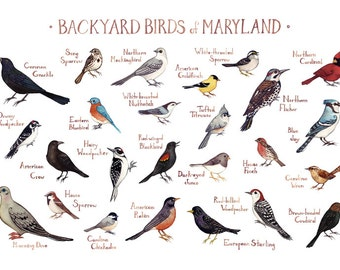 Maryland Backyard Birds Field Guide Art Print / Watercolor Painting / Wall Art / Nature Print / Bird Poster