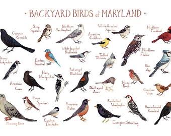 Maryland Backyard Birds Field Guide Art Print / Watercolor Painting / Wall Art / Nature Print / Bird Poster