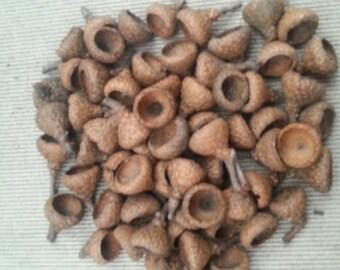 Small Acorns Caps - Qty 50