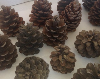 Pinecones - box full ready for shipping