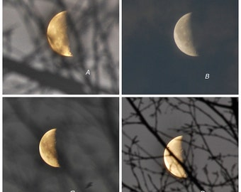 Waning Moon 50%, third quarter moon through trees, gold half moon photograph, white moon in grey sky, moon phase photo