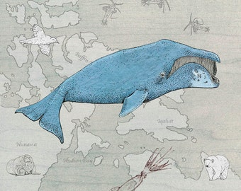 bowhead whale digital art print Canadian arctic map