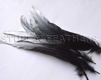 Silver tips long Black Coque rooster tail feathers, painted, selected loose feathers for millinery, decor / 10-12 in (25-30 cm) / F56-10/6S
