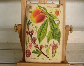 vintage botanical fruit tree branch, peach plate, old image applied to wood ready to hang, small gardeners gift