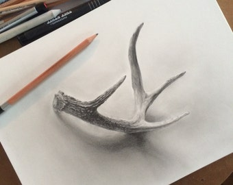 Deer Antler Graphite Drawing Giclee Print