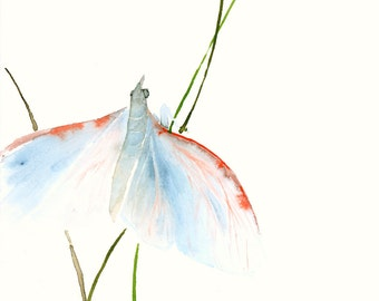 Lightblue Moth Fine Art Print from Original Watercolor Painting