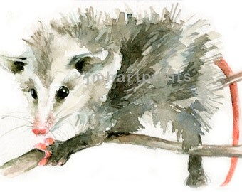 Watercolor Possum, Possum Print