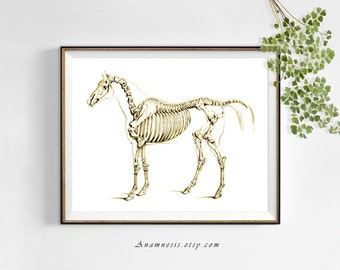 HORSE SKELETON in SEPIA - Instant Digital Download - printable antique horse anatomy illustration for prints, totes, banners, scrapbooking