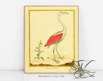 PINK FLAMINGO Print  - digital download - printable antique bird illustration for framing, totes, pillows, cards etc. - lovely bird wall art