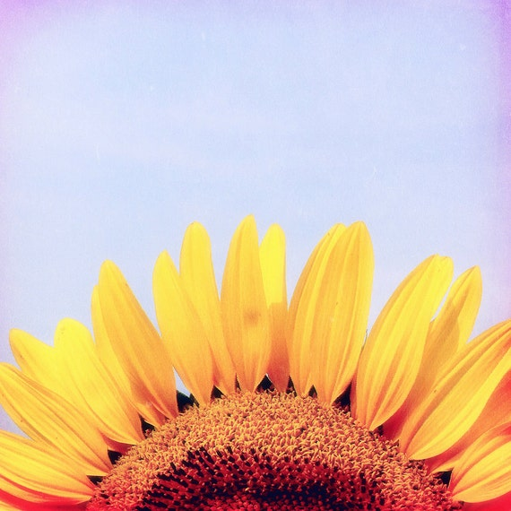 Sunflower Photograph, flower photography, yellow, blue, affordable gift idea, nature photo