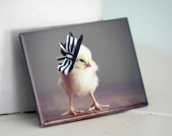 Chicken Magnet Miniature Derby Hat Rectangle Refrigerator Decoration Chicks in Hats Baby Animals Open