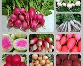 Extreme Heirloom Radish Mix Seeds Non GMO