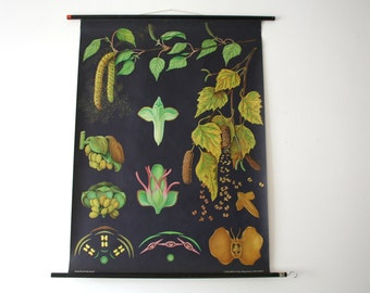 Vintage. Pull down chart. Jung Koch Quentell. Botanical. School. Science. Poster. Mid Century German DDR Educational Canvas