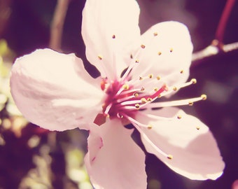 Antique Pink Blossom III, Floral, Antique Pink, Spring, Fine Art Photography, Wall Decor