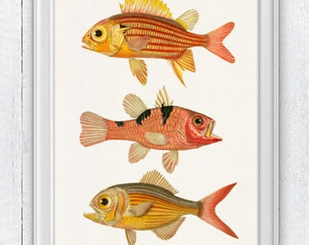 Ocean life Fishes Poster print- Vintage  fishes n01- Sea fish collage- sea life print-multicolor fishes SAS018