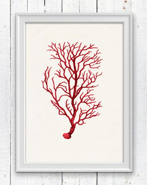 Antique sealife Illustration -Red coral no.02 - sea life print-Marine  sea life illustration A4 print SPC028