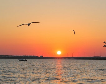 Sea Gulls,Sunset,Ocean,Seascape,Beach,Dusk,Evening,Shore,Seashore,Print,Photography,Canvas Art