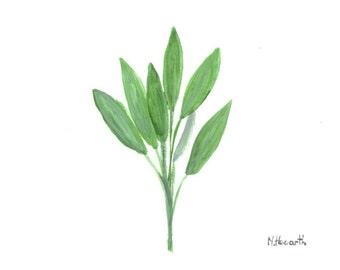 Sage art original watercolour painting sage painting herb art kitchen decor 6 x 4 inch