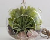 Air Plant Terrarium Kith with  Rose Quartz and Chartreuse Moss - Large with 1 Plant